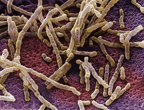 Бактерии в кишечнике приносят пользу