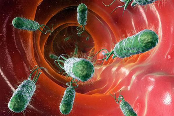 Бактерии спускаются по пищеводу в желудок