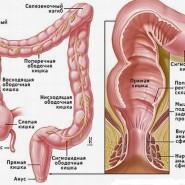 Как устроен толстый кишечник
