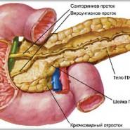 Это самая большая железа в теле человека