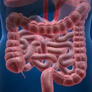 Человек должен бережно заботиться о здоровье кишечника