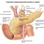 Это самая большая и важная железа в теле человека