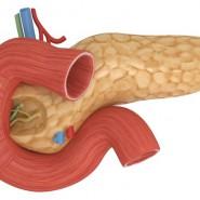 Важнейший орган в пищеварении человека