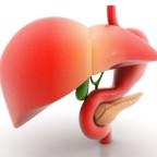 Важнейшие органы для здоровья человека