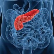Поджелудочная железа является важнейшим органом человека