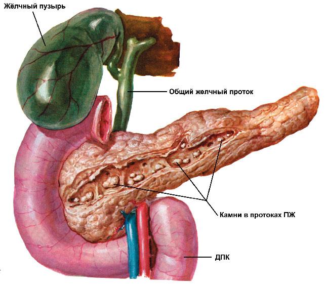 При панкреатите страдает поджелудочная железа