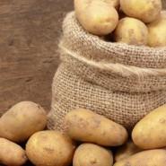 Картофель является кладезем полезных веществ