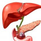 За здоровьем этих органов следует тщательно следить