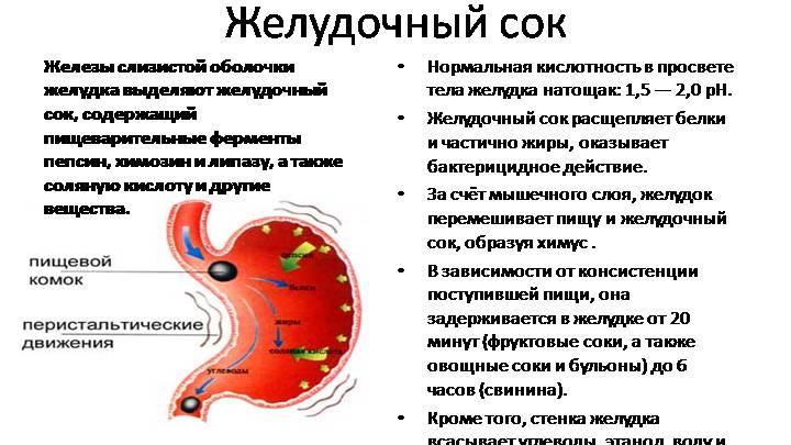 Пищеварительная функция